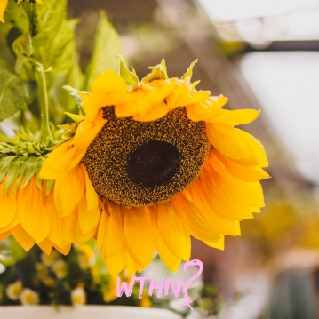 Bohemian + Flower power